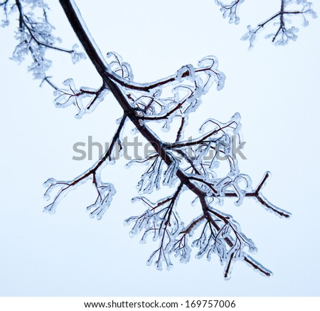 Winter, tree branches and ice - stock photo