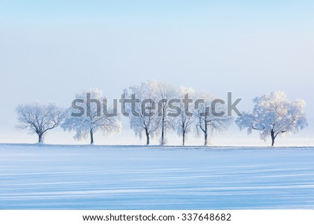 Winter tree by the road in the field - stock photo
