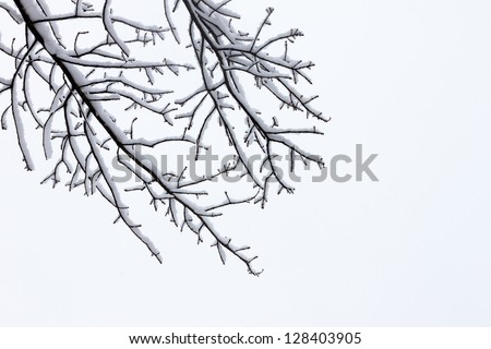 Winter tree conceptual image. Black and white photo