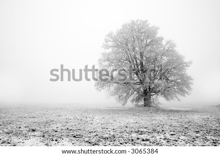 winter tree covered frost mist