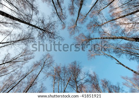 winter tree crowns on deep blue sky - stock photo