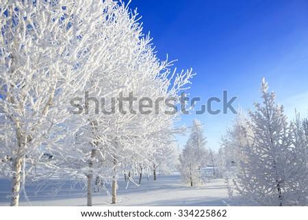 Winter trees. Beautiful white winter on Blue sky. - stock photo