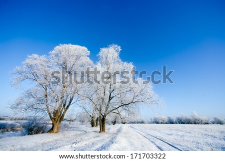 Winter trees in the clear sky