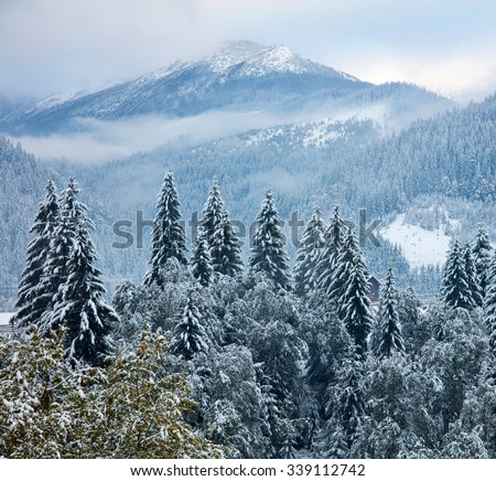 Winter trees in the mountains - stock photo