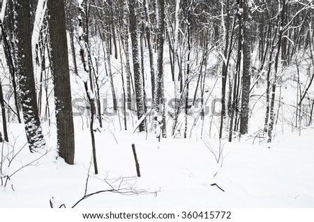 winter trees in the ravine