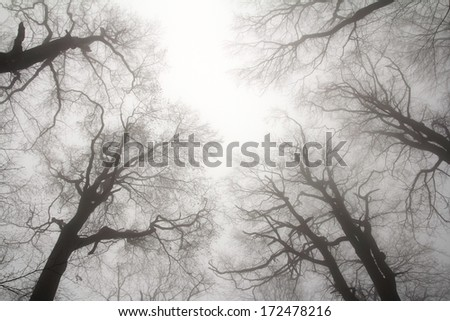 winter treetops - stock photo