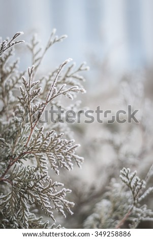 Winter twigs and grass covered with frost and snow - stock photo