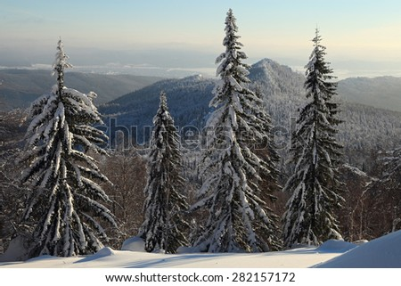 Winter view with a huge and snow covered firs on backdrop of the mountains and Beloretsk city, Malinovaya mount, South Urals, Russia. - stock photo