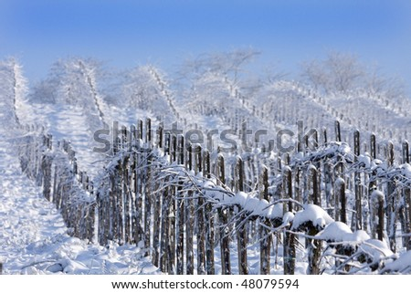 Winter vineyards, Oltrepo Pavese, Lombardy, Italy. - stock photo