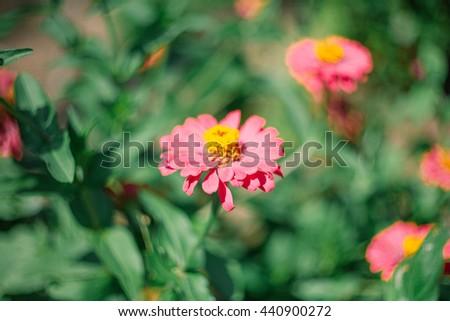 Winter vintage flower. - stock photo
