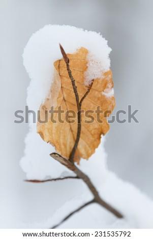 winter wonder land - single snow covered leaf - stock photo