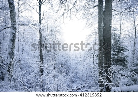 Winter wonderland in a snowy forest