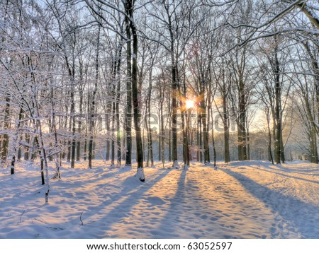 Wintersun in snowy forest (HDR) - stock photo