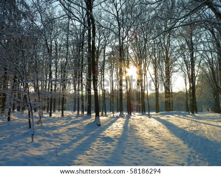 Wintersun in snowy forrest