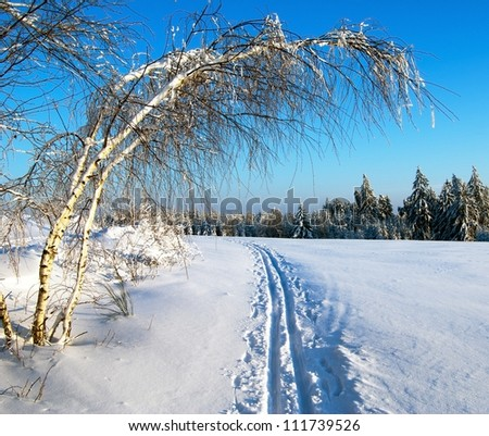 wintry evening view cross country skiing way with ribbon tree - stock photo