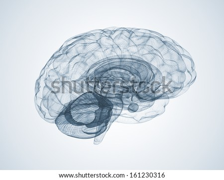 Wire frame model of the human brain - stock photo