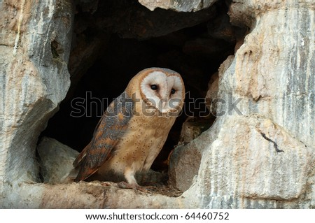 wise owl - stock photo