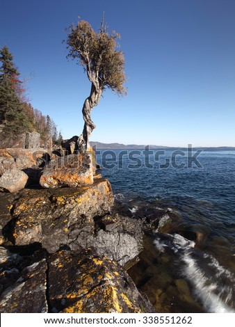 Witch tree at on the rocky shoreline Lake Superior, Minnesota - stock photo
