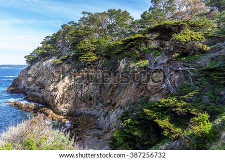 With blue sea & sky, a lone Cypress tree is precariously surviving, with exposed roots to the elements at Point Lobos State Natural Reserve, near Cypress Cove, along the rugged Big Sur coastline.     - stock photo