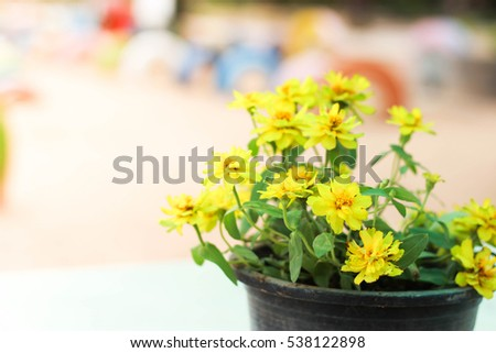 Potted bright yellow flowers garden stock photo royalty free with potted bright yellow flowers in the garden mightylinksfo