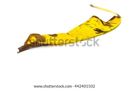 withered banana leaf isolated on white background - stock photo