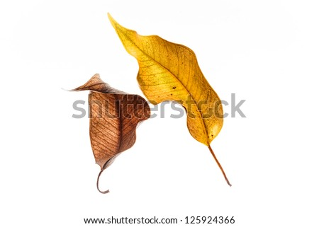 Withered Leaves - stock photo