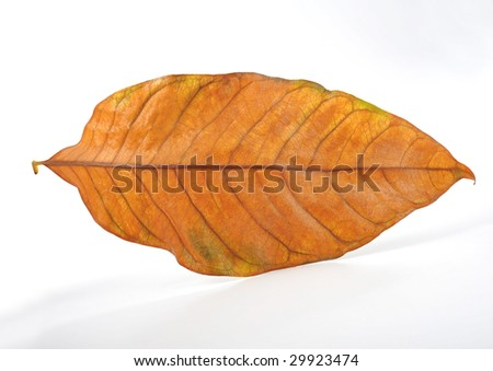 Withered leaves on white background