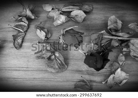 withered rose in black and white,vintage style - stock photo