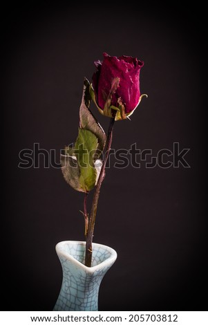 Withered roses in vase on black background - stock photo