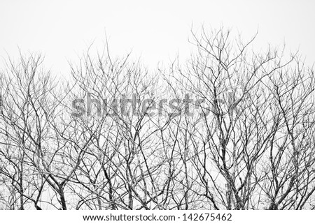 withered tree - stock photo