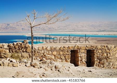Withered tree, Masada, Israel - stock photo