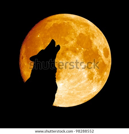 Wolf howling at the moon  in the midnigt - stock photo
