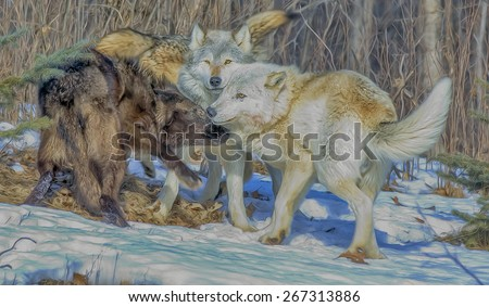 Wolf pack interaction, digital oil painting - stock photo