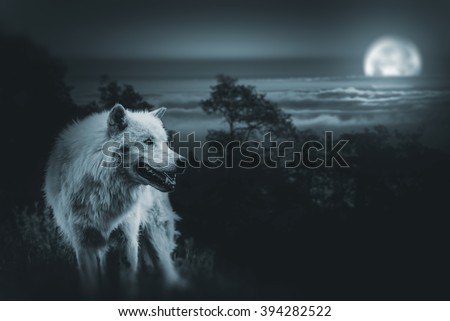 Wolf the King of Wilderness. White Alpha Wolf During Full Moon Night Looking For a Prey in the Wilderness. - stock photo