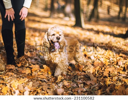 Woman and her dog (American Cocker Spaniel) standing in autumn park - stock photo