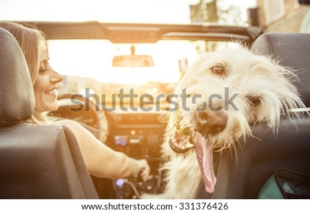 Woman and her labradoodle dog driving with the car. concept about animals - stock photo