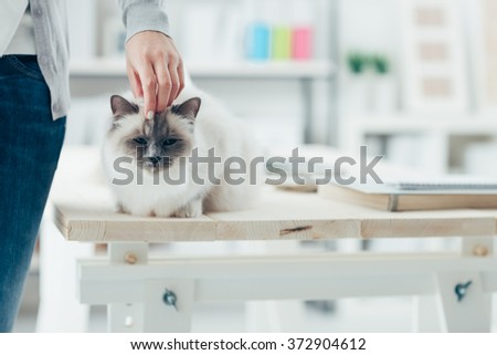 Woman at home caressing her lovely birman cat on a table, room interior on background - stock photo