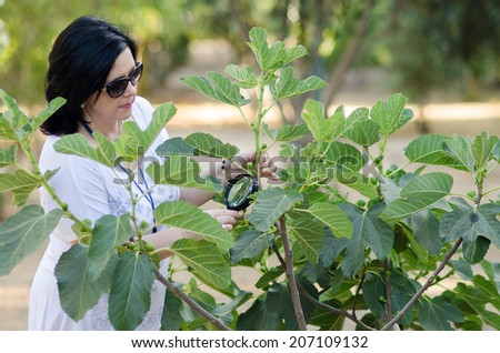Woman botanist checking the growth of figs on the tree with magnifying glass - stock photo
