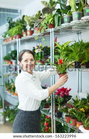 woman chooses Guzmania plant at flower shop - stock photo
