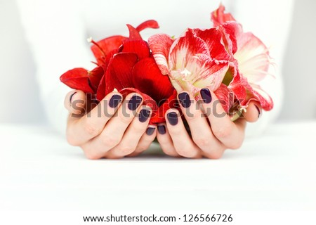 Woman cupped hands with beautiful manicure holding bright amaryllis flowers on white