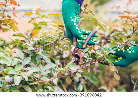 Woman cuts bush with scissors In the garden