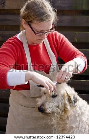 woman cutting dogs fur. - stock photo