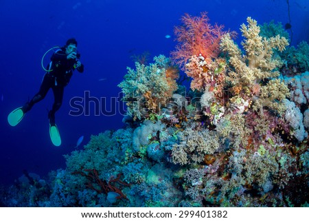 Woman diver explores reef, St John's, Red Sea, Egypt - stock photo