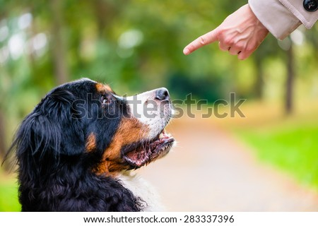 Woman doing obedience training with dog practicing sit command - stock photo