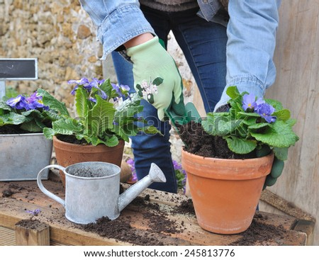 woman doing the flower potting outside - stock photo