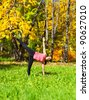 Woman exercises in the autumn forest yoga Ardha chandrasana pose - stock photo