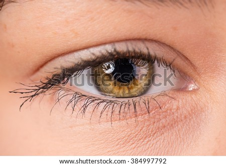 Woman eye with long eyelashes. Macro shot.