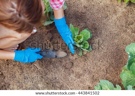 Woman farmer takes care of the plants on the plantation - stock photo