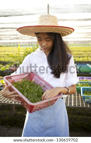 woman farmer, Young Asian girl wearing weave hat collecting plant in orchid farm - stock photo