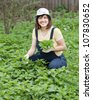 Woman gathers nettle at spring garden - stock photo